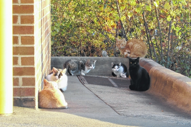 Animal lover aims to save cat colony